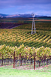 Vines with windmill in Napa