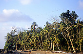 Marenco, Osa Peninsula, Costa Rica. Idyllic beach at Rio Claro with tall rainforest and palm trees behind.