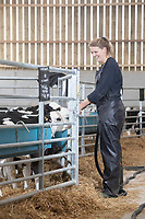 24-2-2021 Dispensing milk to young dairy calves from a mobile milk mixer <br /> ©Tim Scrivener Photographer 07850 303986<br />      ....Covering Agriculture In The UK....