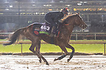 November 1, 2018: Lightning Spear (GB), trained by David Simcock, exercises in preparation for the Breeders' Cup Mile at Churchill Downs on November 1, 2018 in Louisville, Kentucky. Jamey Price/Eclipse Sportswire/CSM