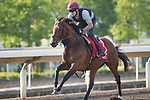 SHA TIN,HONG KONG-DECEMBER 08 : Deauville,trained by Aidan O'Brien,exercises in preparation for the Hong Kong Cup at Sha Tin Racecourse on December 8,2017 in Sha Tin,New Territories,Hong Kong (Photo by Kaz Ishida/Eclipse Sportswire/Getty Images)