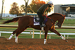 Mr Freeze, trained by trainer Dale L. Romans, exercises in preparation for the Breeders' Cup Dirt Mile at Keeneland Racetrack in Lexington, Kentucky on November 4, 2020.