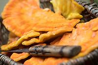 Schwefel-Porling, Schwefelporling, Gemeiner Schwefelporling, Schwefelporlinge, Pilzkorb, Pilzernte, Pilze sammeln, Porling, Laetiporus sulphureus, sulphur polypore, sulphur shelf, chicken mushroom, crab-of-the-woods, chicken-of-the-woods, le Polypore soufré
