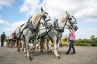 BNPS.co.uk (01202 558833)<br /> Pic: MaxWillcock/BNPS<br /> <br /> Pictured: A team competing in the time trial using a pair of Percheron working horses.<br /> <br /> Heavy, steady, go!<br /> <br /> The New Forest Heavy Horse Driving Trial returns to the former site of RAF Beaulieu, after the equine event was cancelled last year due to the coronavirus pandemic. Teams drive five miles around the airfield in Hampshire.