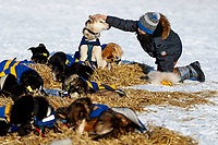 14 year old Huslia student Joseph Williams pets a Hugh Neff dog at the Huslia checkpoint during the 2017 Iditarod on Friday morning March 10, 2017.<br /> <br /> Photo by Jeff Schultz/SchultzPhoto.com  (C) 2017  ALL RIGHTS RESERVED