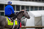 LOUISVILLE, KY - MAY 05: Mohaymen stands before his gallop in preparation for the Kentucky Derby at Churchill Downs on May 05, 2016 in Louisville, Kentucky. (Photo by Zoe Metz/Eclipse Sportswire/Getty Images)