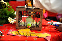 A fortune teller's 'tarot' parrot picks cards at a party before the wedding of British/Punjabi couple Lindsay and Navneet Singh.