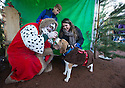 """18/12/16<br /> <br /> Beagle, Rigby with owners meet Santa Paws.<br /> <br /> Close to 800 dogs, many of them dressed up in festive garb, have visited their very own Santa Paws in a special dog-only Christmas grotto held in Sherwood Forest in Nottinghamshire this weekend.<br /> The two-day event, which was organised by park rangers working for Nottinghamshire County Council, has been running for three years.<br /> Ranger Graeme Turner, who originally came up with the idea for a doggy-themed Santa's Grotto said this year has been the best so far.<br /> """"The queue is huge, it snakes back all the way round the visitor's centre,"""" he said. """"All the dogs are being very well behaved, I guess they don't want to get onto Santa Paw's naughty list this close to Christmas!""""<br /> All canine visitors to the grotto got a special doggy bag full of treats and money raised from the event will go to Jerry Green Dog Rescue charity.<br /> <br /> All Rights Reserved F Stop Press Ltd. (0)1773 550665   www.fstoppress.com"""