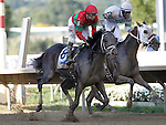 September 1, 2014: Protonico (#8), Joe Bravo up, wins the grade 3 Smarty Jones Stakes at Parx Racing in Bensalem, PA. Trainer is Todd Pletcher. Owner is International Equities Holding, Inc. Classic Giacnroll, right, Kendrick Carmouche up, was second. ©Joan Fairman Kanes/ESW/CSM