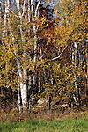 Trees in fall