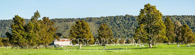 Sheep farm in Whataroa, West Coast, South Westland, New Zealand, NZ