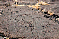 Petroglyphs at Puako Petroglyph Archacological District. Malama Trail, Hawaii, the3 big island