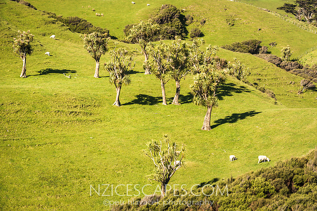 Coastal farmland near Wharariki Beach on west coast of South Island, Nelson Region, South Island, New Zealand