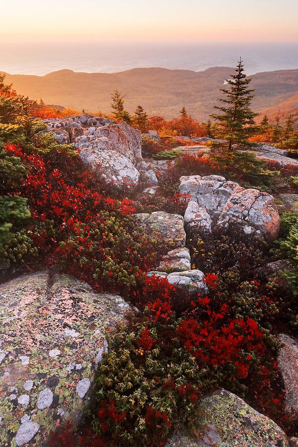 Fall color amidst granite bedrock on summit of Cadillac Mountain at sunrise, Mount Desert Island, Acadia National Park, near Bar Harbor, Maine, USA