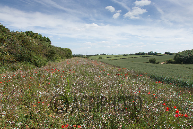 Field Margin <br /> Picture Tim Scrivener 07850 303986<br /> ….Covering agriculture in the UK….