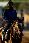 MAY13, 2021: Beautiful Gift with Humberto Gomez  gallops in preparation for the Black eyed Susan Stakes at Pimlico Race Course in Baltimore, Maryland on May 13, 2021. EversEclipse Sportswire/CSM