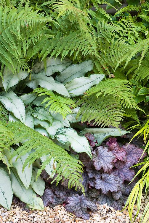 Pulmonaria Cotton Cool, Heuchera Palace Purple, Dryopteris fern in shade garden plant combination