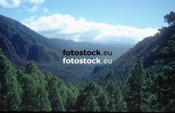 overview over the forest of the National Park Caldera de Taburiente National Park, La Palma de Gran Canaria<br /> <br /> vista sobre el bosque del Parque Nacional Caldera de Taburiente, La Palma de Gran Canaria<br /> <br /> Blick über den Wald des National Parks Caldera de Taburiente, La Palm de Gran Canaria<br /> <br /> Original: 35 mm slide transparency