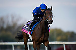 October 31, 2018 : La Pelosa (IRE), trained by Charlie Appleby, exercises in preparation for the Breeders' Cup Juvenile Fillies Turf at Churchill Downs on October 31, 2018 in Louisville, Kentucky. Evers/ESW/Breeders Cup