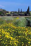 CYPRUS, landscape in springtime between Nicosia and Larnaca | ZYPERN, Landschaft im Fruehling zwischen Larnaka und Nikosia