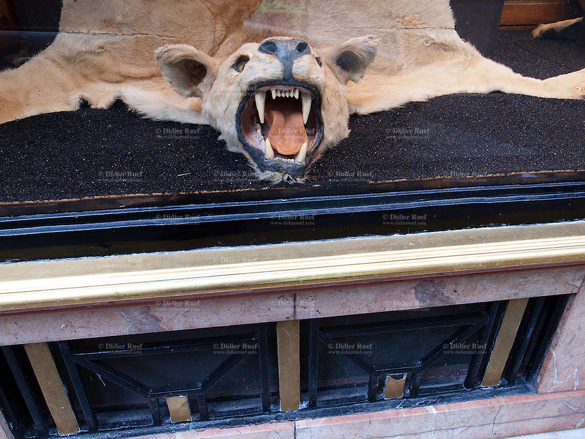 France. Paris. A dead bear with its mouth wide open in a shop window. Taxidermy. Mouth white open with ferocious teeth. 17.11.10  © 2010 Didier Ruef