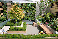 Garden Bench in small patio garden with plantings, green wall of vertical perennials and ferns, privacy, Acer, boxwood Buxus