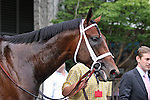 31 May 2010: Quality Road after the Metropolitan Mile Handicap at Belmont Park in Elmont NY.