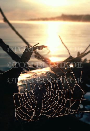 Spider web on a log along the shore of Feldtmann Lake at Isle Royale National Park, Michigan.