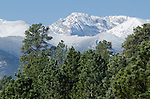 snowcapped peaks above pondeosa pines, Estes Park, Colorado, USA