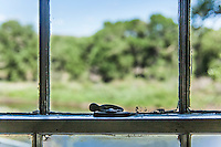 A window latch, maybe original, maybe not, on a window in an 1800s bridge tender's house at Fort Steele, Wyoming.