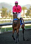 February 13, 2010.Joel Rosario, riding St. Trinians, wins the Santa Maria Handicap at Santa Anita Park, Arcadia, CA