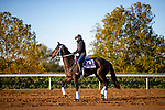 November 2, 2020: Vequist, trained by trainer Robert E. Reid Jr., exercises in preparation for the Breeders' Cup Juvenile Fillies at Keeneland Racetrack in Lexington, Kentucky on November 2, 2020. Alex Evers/Eclipse Sportswire/Breeders Cup