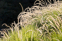 Grass meadow by John Greenlee at The Late Show Gardens, Cornerstone Sonoma