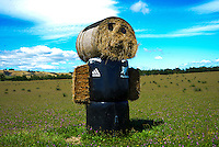 A haystack watches the Gladstone Road leg during day one of the UCI Oceania Tour - NZ Cycling Classic stage one - Masterton to Gladstone circuit in Wairarapa, New Zealand on Wednesday, 20 January 2016. Photo: Dave Lintott / lintottphoto.co.nz