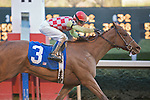 21 February 2009: Palanka City with jockey Chris Emigh winning the Spring Fever stakes race at Oaklawn in Hot Springs, Arkansas