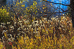 Backlit fall vegetation