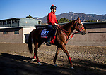 OCT 26: Breeders' Cup Sprint entrant Matera Sky, trained by Hideyuki Mori, at Santa Anita Park in Arcadia, California on Oct 26, 2019. Evers/Eclipse Sportswire/Breeders' Cup