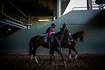 January 30, 2021: Roman Centurian and Juan Hernandez at the Robert B Lewis Stakes at Santa Anita Park in Arcadia, California on January 30, 2021. Evers/Eclipse Sportswire/CSM