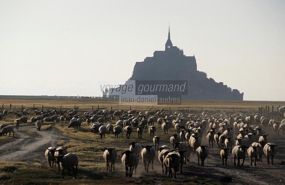 Europe/France/Normandie/Basse-Normandie/50/Manche/Env Saint-Michel-de-Montjoie: Le Mont Saint-Michel et les moutons de pré-salé de Philippe Farcy
