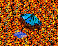 Monarchs - Leaving the Crowd - computer illustration.