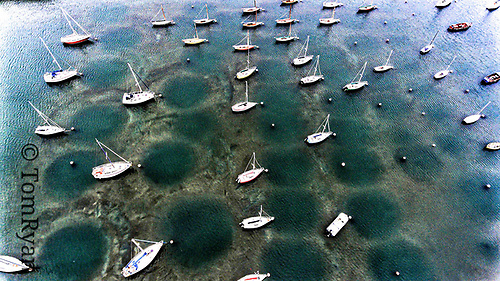 Low water in the Outer Harbour, where 40 years of siltation have resulted in an all-enveloping layer of soft mud where each boat on a swinging mooring has gently created its own bed, normally invisible except from an aerial photo. Photo: Tom Ryan