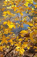 Potomac Fall