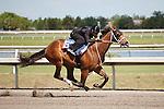 #53Fasig-Tipton Florida Sale,Under Tack Show. Palm Meadows Florida 03-23-2012 Arron Haggart/Eclipse Sportswire.