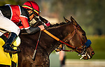JAN 12: Mother Mother with Joel rosario (left) wins the Kalookan Queen Stakes at Santa Anita Park in Arcadia, California on January 12, 2020. Evers/Eclipse Sportswire/CSM