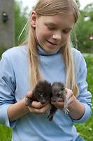 Waschbär und Marderhund gemeinsame Pflege und Aufzucht in meschlicher Obhut, Jungtier wird von Hand aufgezogen, verwaistes Jungtier, Aufzucht eines Wildtieres, Tierkind, Tierbaby, Tierbabies, Waschbaer, Wasch-Bär, Procyon lotor, common raccoon, Marder-Hund, Enok, Seefuchs, Nyctereutes procyonoides, raccoon dog, Chien viverrin