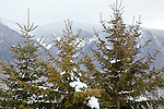 Late winter along the Kancamagus Highway, White Mountain National Forest, NH, USA