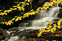 Fall foliage frames a small section of brook at Fletchers Cascades, near Waterville Valley NH.