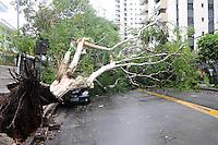SAO PAULOl>>, SP, 14/12/2011, Varias arvores cairam no Bairro de campo Belo nas Rua.Antonio de Macedo Soares e Pascal.FOTO: ADRIANO LIMA - NEWS FREE