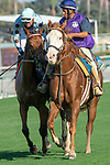 """ARCADIA, CA. SEPTEMEBER 29: #7 Sophie P, ridden by Kent Desormeaux, in the post parade of the Rodeo Drive Stakes (Grade l) """"Win and You're in Breeders Cup Juvenile Fillies Division"""" on September 29, 2018, at Santa Anita Park in Arcadia, CA. (Photo by Casey Phillips/Eclipse Sportswire/CSM)"""