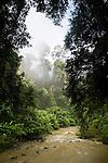 Sediment laden river after storm flowing through lowland rainforest, Tawau Hills Park, Sabah, Borneo, Malaysia